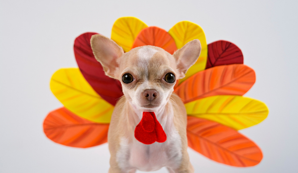 Make Sure Your Marketing Isn't a Real Turkey This Thanksgiving